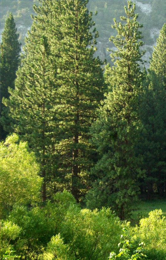 Tree & Shrub Farm