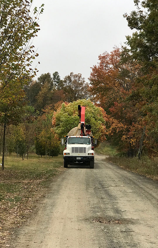 Moving a Large Tree